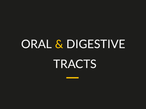 Oral & digestive tracts
